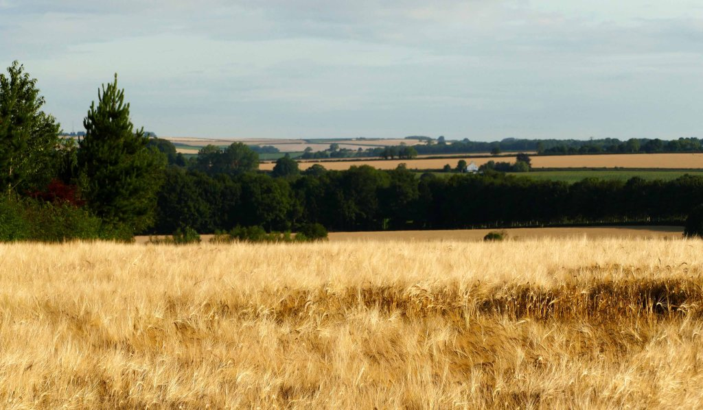 The view from Mareham north to Flint Hill.
